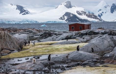 penguincolony2