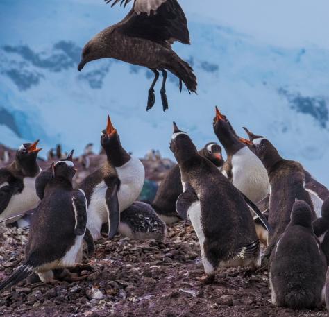 Pingu&bird